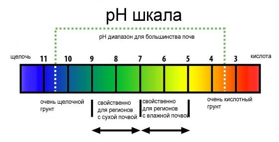Сорта голубики садовой в белоруссии описание